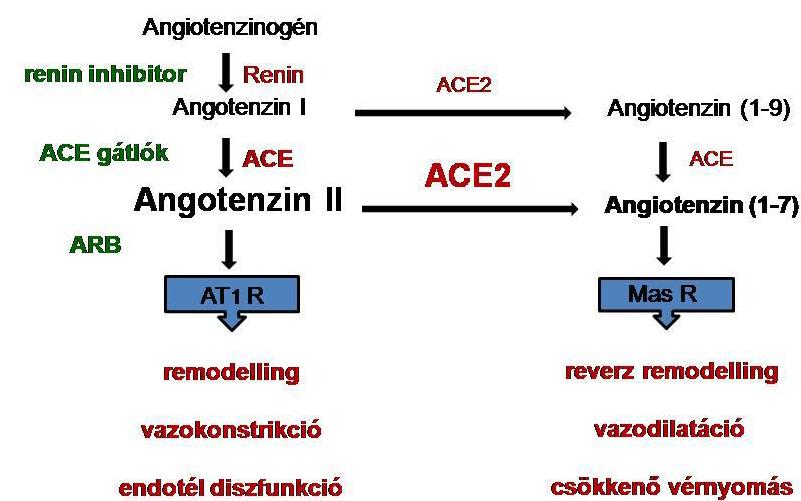 angiotenzin receptor blokkoló magas vérnyomás esetén