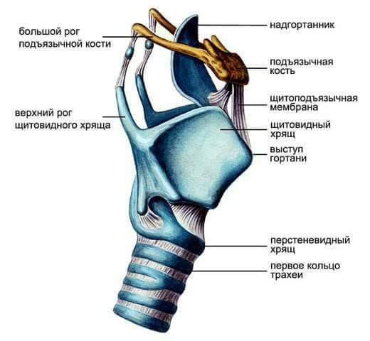 a gerinc hipertóniájának görbülete férfi magas vérnyomás 40 éves
