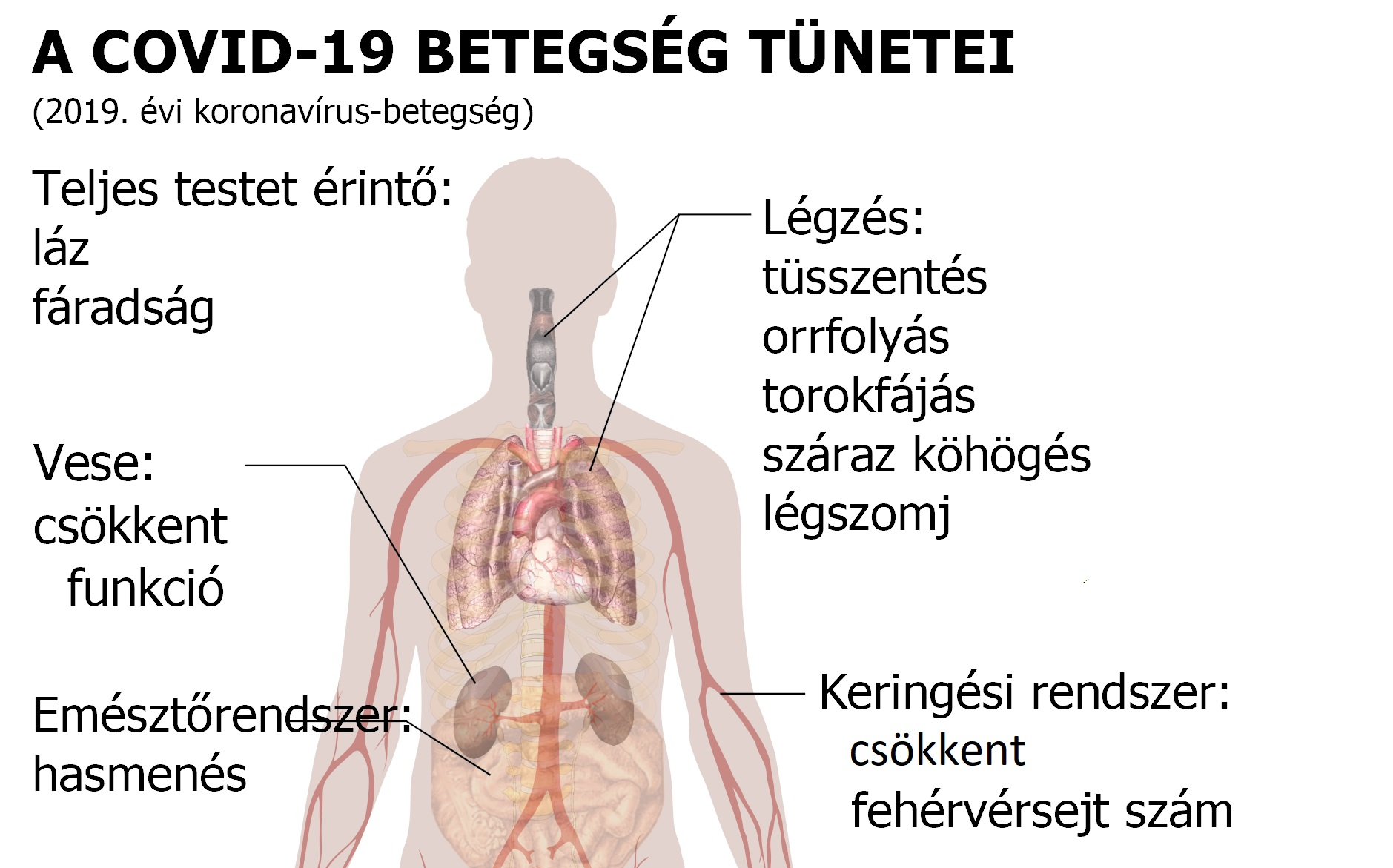 7 tévhit a magas vérnyomásról - Zöld Újság