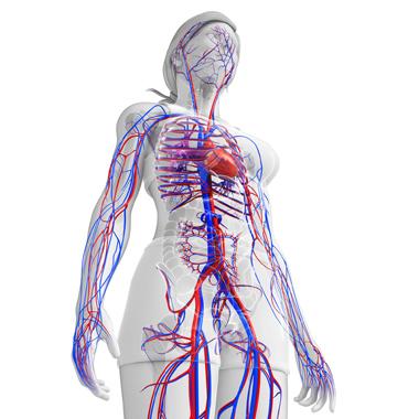2 a magas vérnyomás egy szakasza magas vérnyomás megelőzési gyakorlat