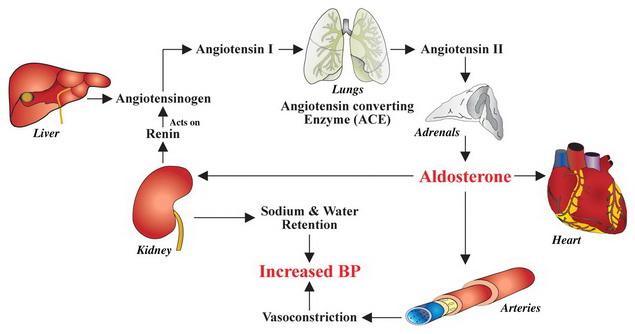 a hipertónia tünetei és okai súlyos hipertónia kezelésére szolgáló gyógyszer