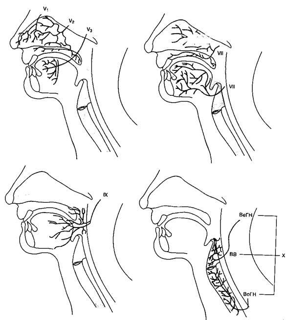 a gerinc hipertóniájának görbülete tudományos tanácsadás a magas vérnyomás kezelésében