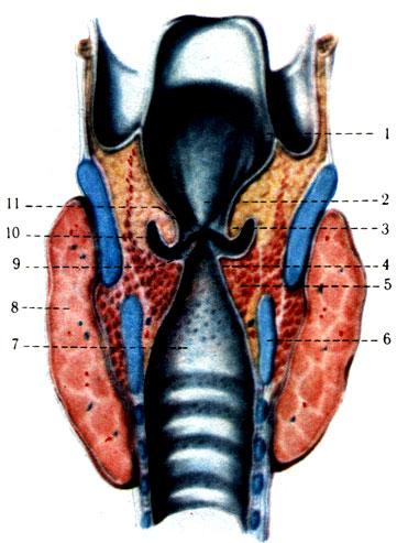 a gerinc hipertóniájának görbülete átmeneti magas vérnyomás mi ez