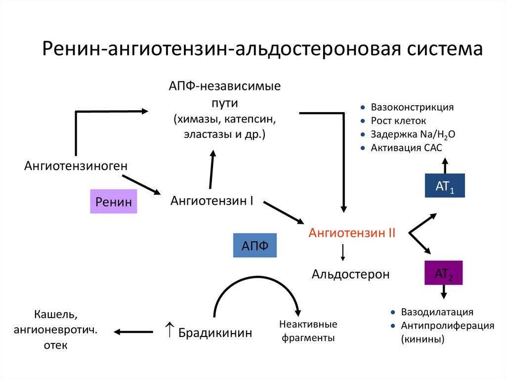 diuretikumok magas vérnyomás esetén, amelyek nem választanak ki káliumot magas vérnyomás válságok nélkül