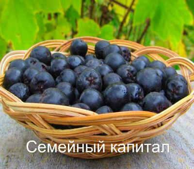 Aronia tinktúra vodkával - recept - Zöldségek