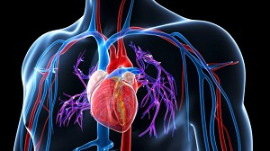Vese artériás hipertónia: tünetek és kezelés - Prosztatagyulladás -