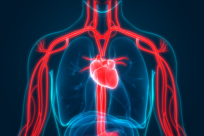lehet-e magas vérnyomás a varicocele miatt