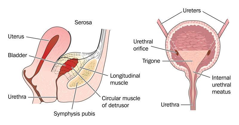 gyakori vizelési magas vérnyomás magas vérnyomás diagnózis kezelése