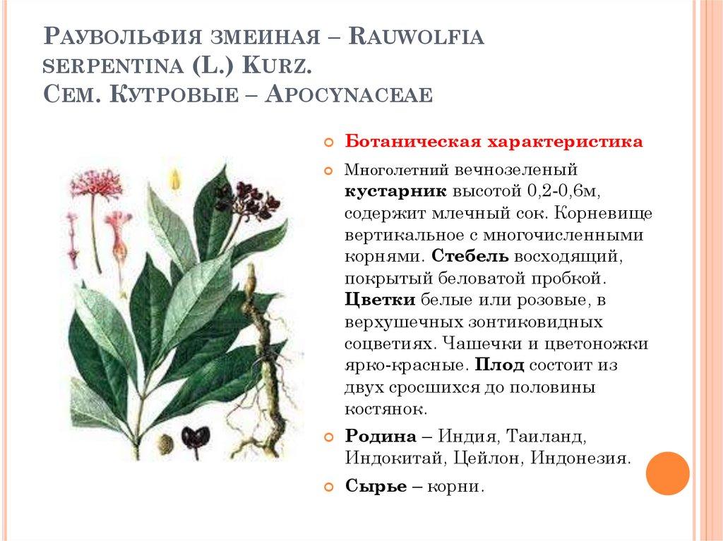 Rauwolfia szerpentina: leírás és az élőhelyek