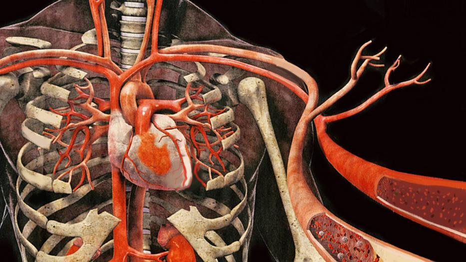 A leghasznosabb ábra a vérnyomásról - HáziPatika